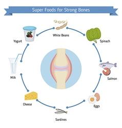 Strong bones foods infographics vector image