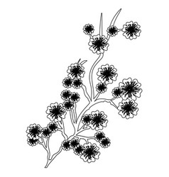 Monochrome branch with flowers of japanese cherry vector