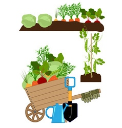 Vegetable beds vector