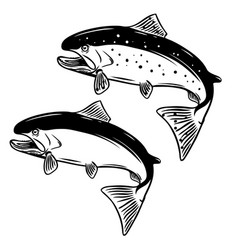 salmon fish on white background vector image vector image