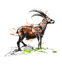 Colored hand sketch Capricorn vector image vector image