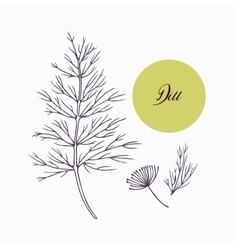 Hand drawn dill branch with leves isolated on vector