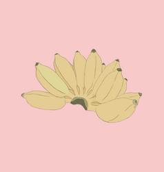 pisang awak banana sketch vector image vector image
