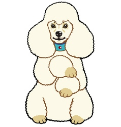 White poodle vector
