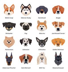 Purebred dogs faces icon set vector