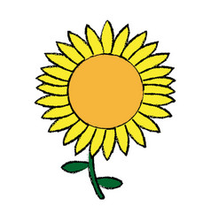 Beautiful nature sunflower season botanical vector