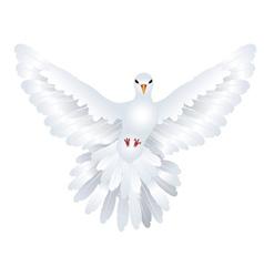 White pigeon vector