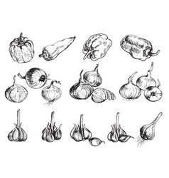 hand drawn onion pepper and garlic vector image vector image