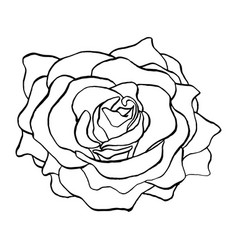 rose flower bud in outlines blossoming single vector image vector image