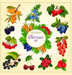 Wild berries and fruits set poster vector