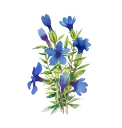 Blue watercolor wildflowers isolated on white vector
