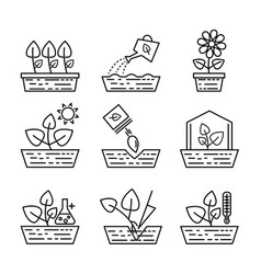 Plant growing line icons greenhouse vector