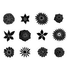 sketches of flowers vector image vector image