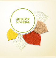 Autumn background with leaves Linden and cherry vector image