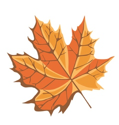 Canada Maple leaf vector image vector image