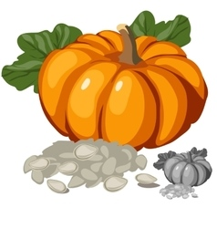 Ripe pumpkin and its seeds vegetables vector