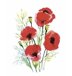 Red watercolor poppies flowers isolated on white vector