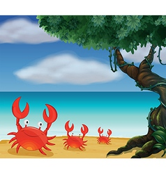 Three crabs at the seashore vector