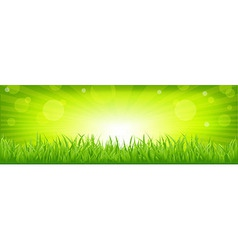 Grass with green background vector
