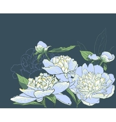 Peony flowers llustration vector