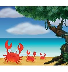 Three crabs at the seashore vector