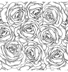 seamless background Roses hand-dra vector image vector image