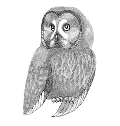 Sketch owl drawn with pen and ink vector
