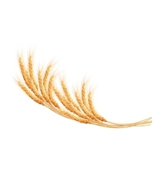 Wheat ears with space for text EPS 10 vector image vector image