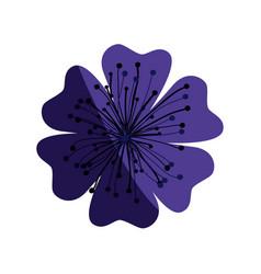 purple flower of japanese cherry tree in white vector image