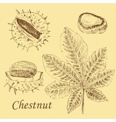 Chestnut and leaf sketch set on white vector