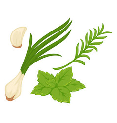 Spring greenery with garlic green onion and herbs vector