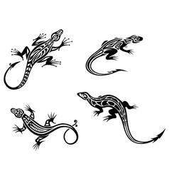 Black lizards isolated on white background vector