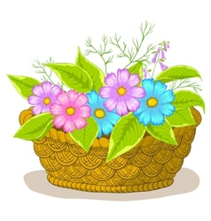 Basket with flowers cosmos vector