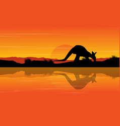 silhouette kangaroo on the river landscape vector image vector image