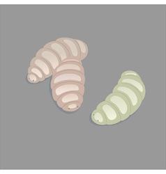 Maggots vector