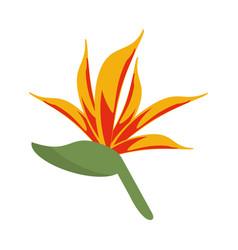 Bird of paradise flower vector
