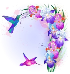 card with Iris flowers and hummingbird vector image