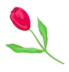 Crimson tulip vector