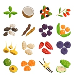 Vegetarian food healthy vegetable and fruits vector