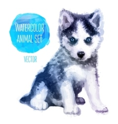 Huskies hand painted watercolor vector image vector image