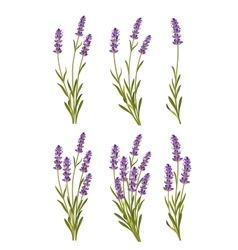 Lavender background vector
