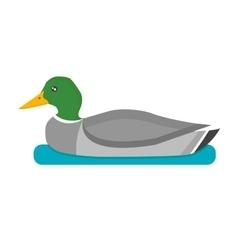 Drake duck vector