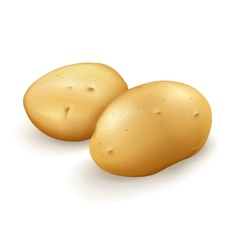 Potatoes vector image