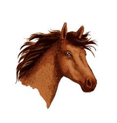 Arabian brown wild horse head sketch symbol vector