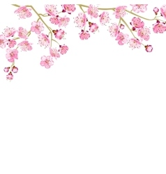 Card with cherry blossom vector image vector image