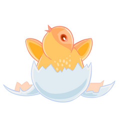 Cute small yellow chicken hatched from an egg and vector