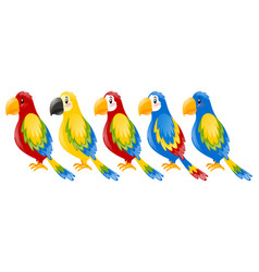 macaw parrots in different colors vector image