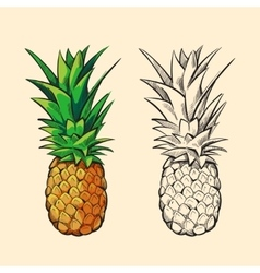 Outline pineapple and color cartoon vector