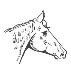 Horse head isolated on white background design vector