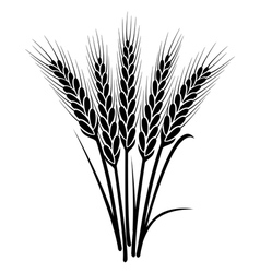 Bunch of wheat ears vector